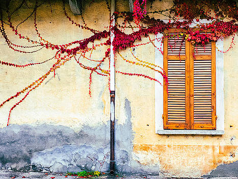 Window and red vine by Silvia Ganora