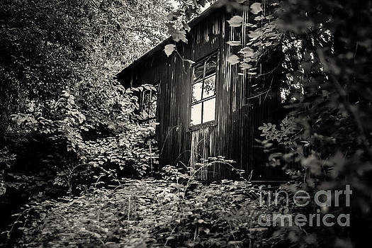 Window in the Woods by Randall  Cogle