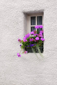 Jenny Rainbow - Window with Geranium. Culross