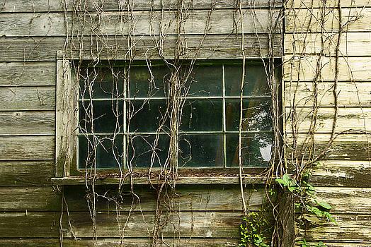 Window by Zalman Latzkovich