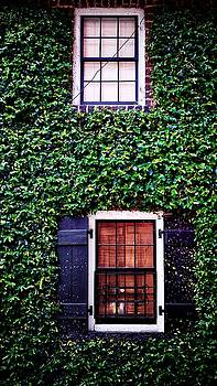 Windows and Ivy by Paul Wilford