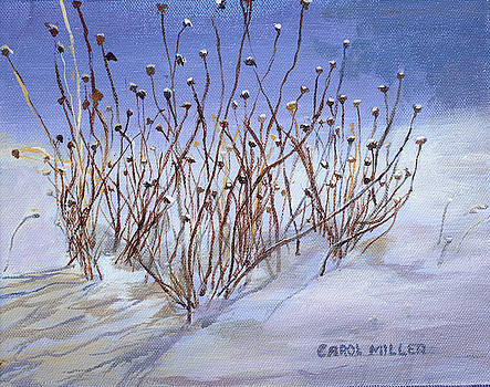 Windswept by Carol L Miller