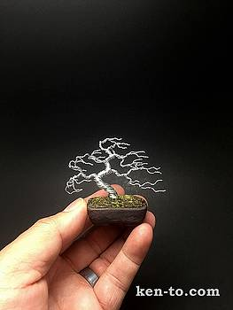 Windswept mame wire bonsai tree sculpture by Ken To by Ken To