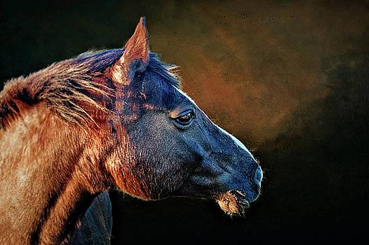 Windswept Pony by Brian Tarr