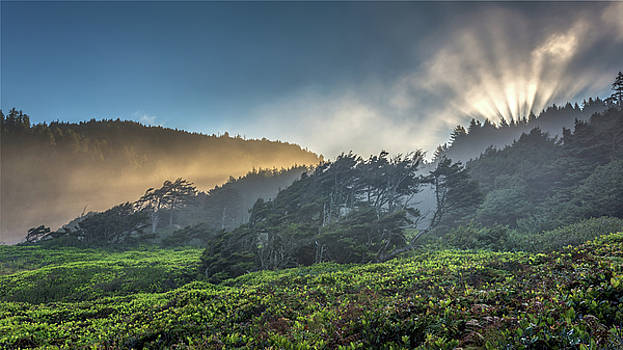Windswept Trees on the Oregon Coast by Pierre Leclerc Photography