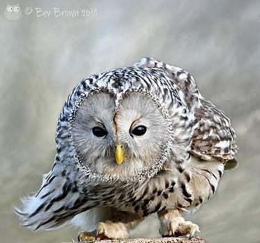 Windy Day Owl by Bev Brown