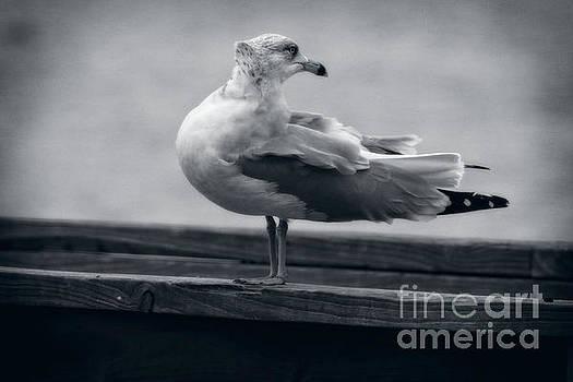 Windy Day Seagull  by Ella Kaye Dickey