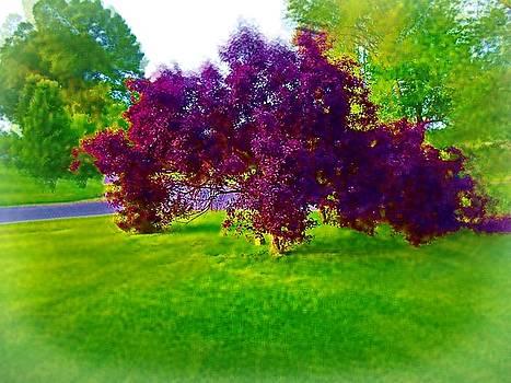 Wine Colored Bush by Skyler Tipton