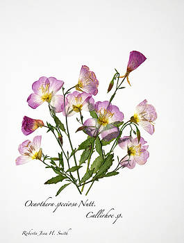 Wine-Cup and Primrose by Roberta Jean Smith