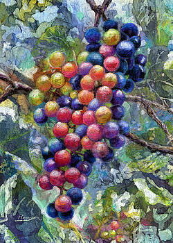 Hailey E Herrera - Wine Grapes