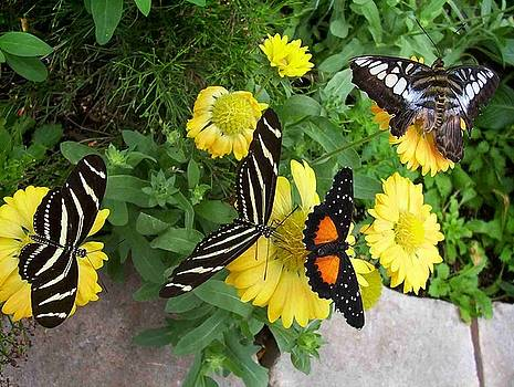 Winged Beauties by Sandy Collier