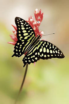 Winged Delight by John Fotheringham