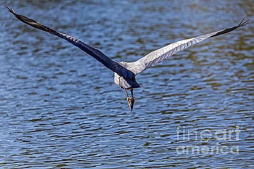 Wings by Kate Brown