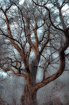 Winter Adagio by Abbie Loyd Kern
