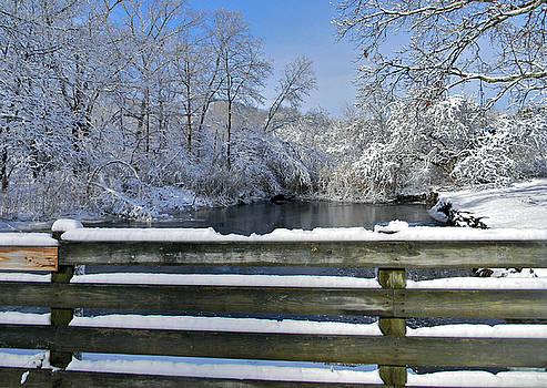 Winter Beauty by Diane Valliere