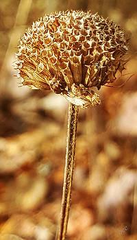 Winter Bee Balm by Bruce Carpenter