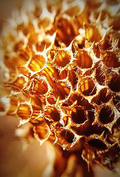 Winter Bee Balm Macro by Bruce Carpenter