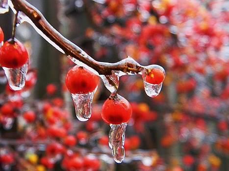 Winter Berries by Emily Michaud