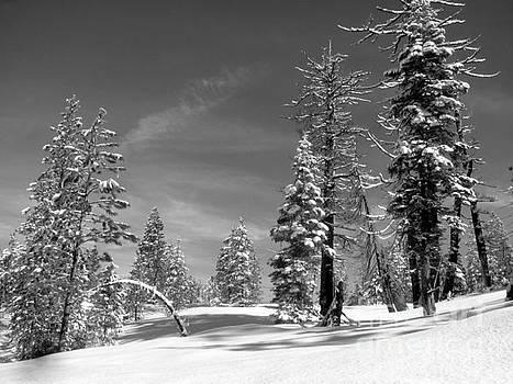 Winter Black and White by Irina Hays