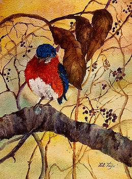 Winter Bluebird by Lil Taylor
