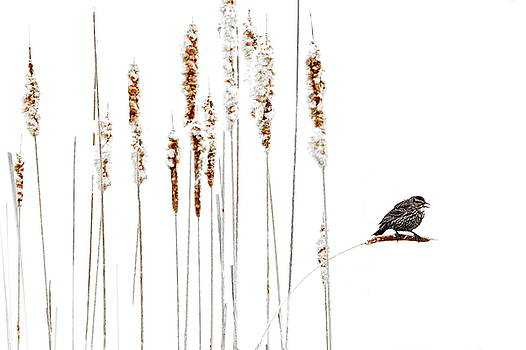 Winter Came Suddenly by Andrea Kollo