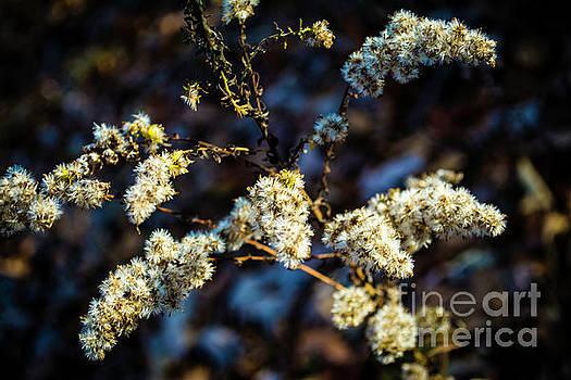 Winter Color by JW Hanley