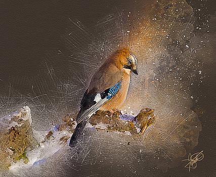Winter Color by Tom Schmidt