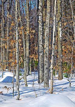 Lynda Lehmann - Winter Copse With Birches
