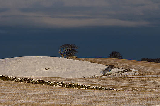 Winter Day by Sue Arber