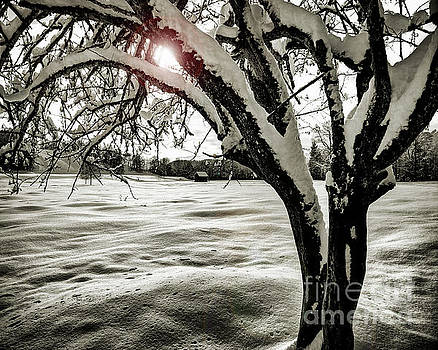 Winter Epilogue by Edmund Nagele