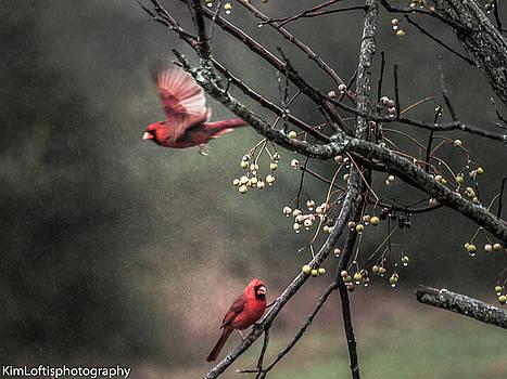 Winter Flight  by Kim Loftis