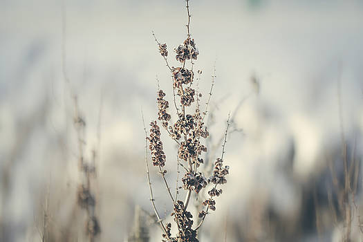 Winter flora by Cindy Grundsten