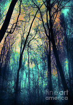 Winter fog by Gina Signore