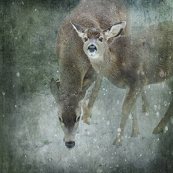 Winter Foraging by Sally Banfill