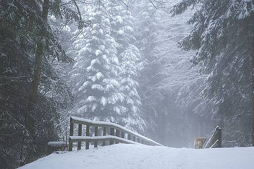 Winter Forest with Golden Retriever by Colleen Williams