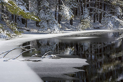 Karol  Livote - Winter Fresh