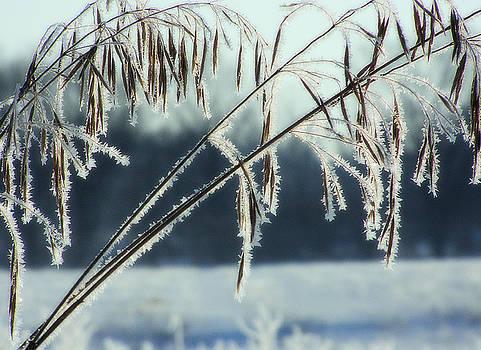 Scott Hovind - Winter Frost 4