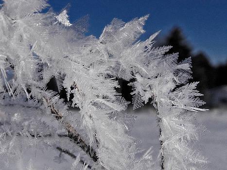 Scott Hovind - Winter Frost 6