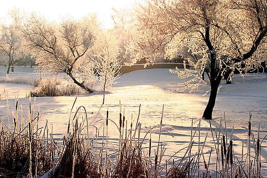 Winter Frost by Steve Augustin