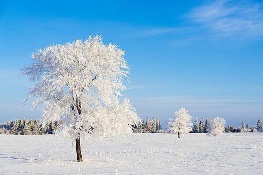 Winter Frostland by Nebojsa Novakovic