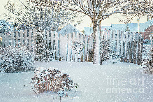 Winter Garden by Verena Matthew