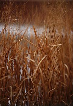 Linda Knorr Shafer - Winter Grass - 1