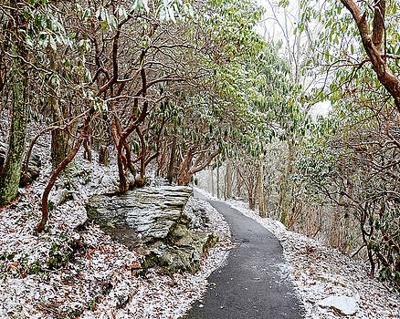 Winter Hiking Trail by Susan Leggett