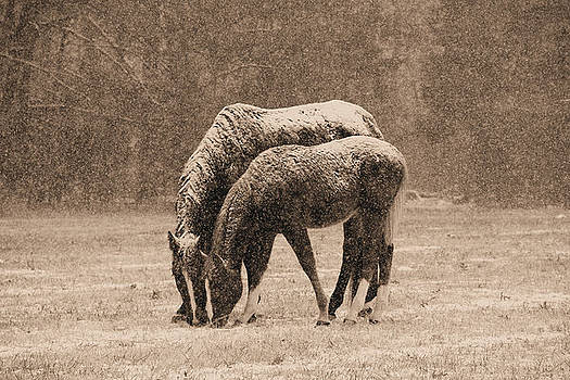 Winter Horses by Troy  Skebo