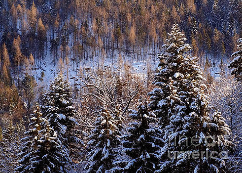 winter in Bavaria 8 by Rudi Prott