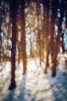 Winter in Snow by Amber Flowers