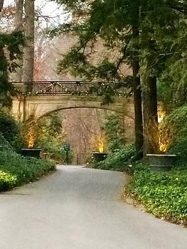 Winter in the Garden by Robin Regan