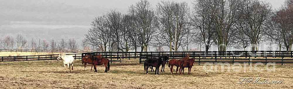 Winter in the Pasture by Linda Mesibov