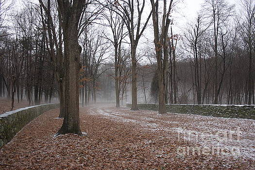 Winter In The Woods by Marcel  J Goetz  Sr