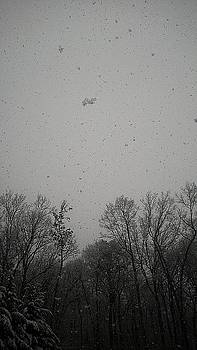 Winter Lace by Carlee Ojeda
